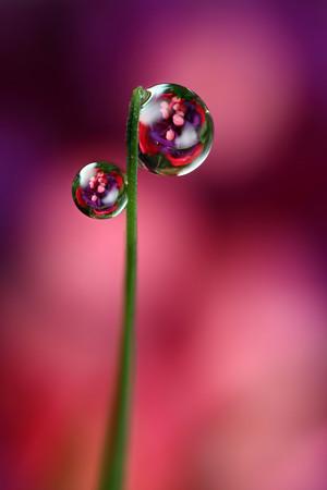 Bubblicious - dewdrop refraction